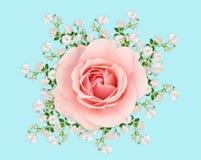 Rosas rosadas y blancas en azul en colores pastel Imágenes de archivo libres de regalías