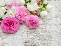 Rosas rosadas y cornejo inglés en el tablero blanco fotografía de archivo