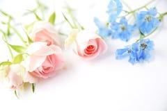 Rosas rosadas y flor azul Imagen de archivo