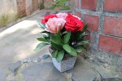 Rosas rosadas y rojas en un pote decorativo Imágenes de archivo libres de regalías