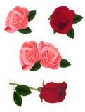 Rosas rosadas y rojas hermosas. Imagen de archivo