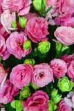 Rosas rosadas y verdes claras hermosas Foto de archivo
