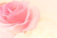 Rosas rosas claras en estilo suave del color y de la falta de definición Foto de archivo libre de regalías