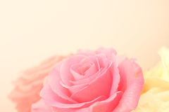 Rosas rosas claras en estilo suave del color y de la falta de definición Fotografía de archivo