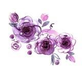 Rosas roxas pintados à mão da aquarela bonito ilustração stock