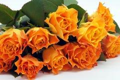 rosas Salmão-coloridas liberadas foto de stock