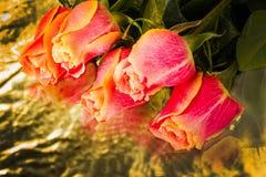 Rosas salvaje-crecientes hermosas del escarlata Imagen de archivo libre de regalías
