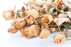 Rosas secadas imagen de archivo