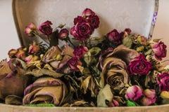Rosas secadas Foto de archivo