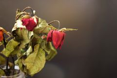Rosas secadas em um vaso na tabela de madeira no fundo preto fotografia de stock