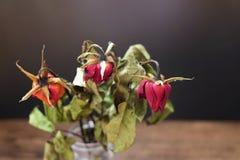 Rosas secadas em um vaso na tabela de madeira no fundo preto foto de stock