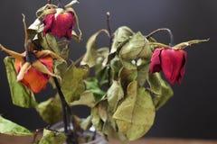 Rosas secadas em um vaso na tabela de madeira no fundo preto imagens de stock