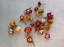 Rosas secadas en un fondo azul fotos de archivo