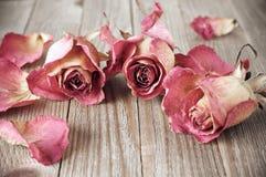 Rosas secadas na madeira fotos de stock