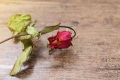 Rosas secadas na tabela de madeira imagens de stock