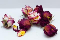 Rosas secadas no fundo branco Fotografia de Stock