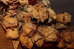 Rosas secas Fotografía de archivo libre de regalías