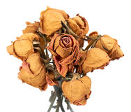 Rosas secas imagen de archivo libre de regalías