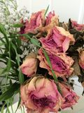 Rosas secas Imagens de Stock