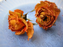 Rosas secas 89 en la placa azul Foto de archivo