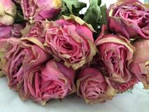 Rosas secas do vintage Fotografia de Stock Royalty Free