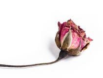 Rosas secas macro Foto de Stock Royalty Free