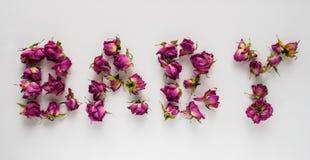 Rosas secas no fundo branco Fotografia de Stock