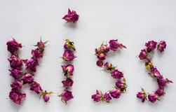 Rosas secas no fundo branco Imagens de Stock