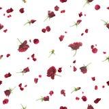Rosas sem emenda na obscuridade - vermelho fotografia de stock royalty free