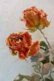 Rosas a través del agua Imagen de archivo libre de regalías