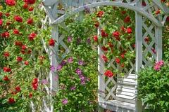 Rosas trepadores Imágenes de archivo libres de regalías