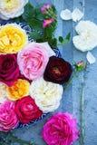 Rosas variadas em uma bandeja fotos de stock