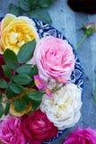 Rosas variadas em uma bandeja, close-up fotos de stock
