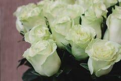 Rosas verdes claras Fotos de archivo
