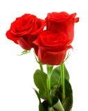 Rosas vermelhas Foto de Stock Royalty Free