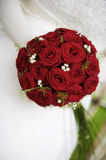 Rosas vermelhas Imagens de Stock Royalty Free