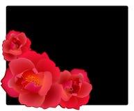Rosas vermelhas Fotos de Stock