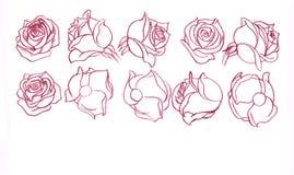 Rosas vermelhas ilustração stock