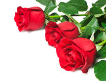 Rosas vermelhas bonitas em um fundo branco Fotografia de Stock
