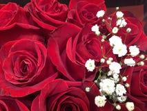 Rosas vermelhas com um pulverizador da respiração do ` s do bebê imagem de stock royalty free