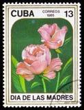 Rosas vermelhas, da série Imagem de Stock Royalty Free