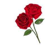 Rosas vermelhas doces de dia de Valentim Fotografia de Stock Royalty Free
