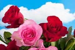 Rosas vermelhas e cor-de-rosa Imagem de Stock Royalty Free