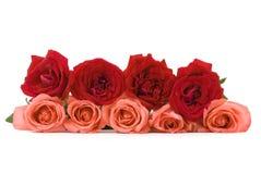 Rosas vermelhas e cor-de-rosa imagem de stock