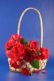 Rosas vermelhas em uma cesta. Fotos de Stock Royalty Free