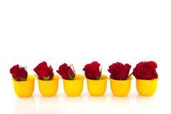 Rosas vermelhas em uns copos de ovo amarelos Fotografia de Stock Royalty Free