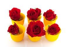 Rosas vermelhas em uns copos de ovo amarelos Fotos de Stock Royalty Free