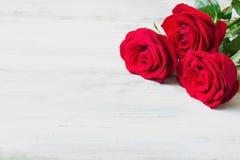 Rosas vermelhas frescas Fotografia de Stock