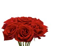 Rosas vermelhas frescas de que os pares gostam de se dar para o dia de Valentine's fotografia de stock