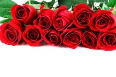Rosas vermelhas no fundo branco Fotografia de Stock Royalty Free